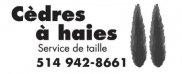 Cèdres à Haies