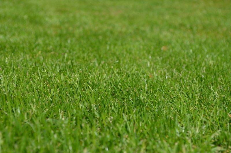 Tonte de pelouse michel grenier saint denis de brompton for Devis tonte pelouse