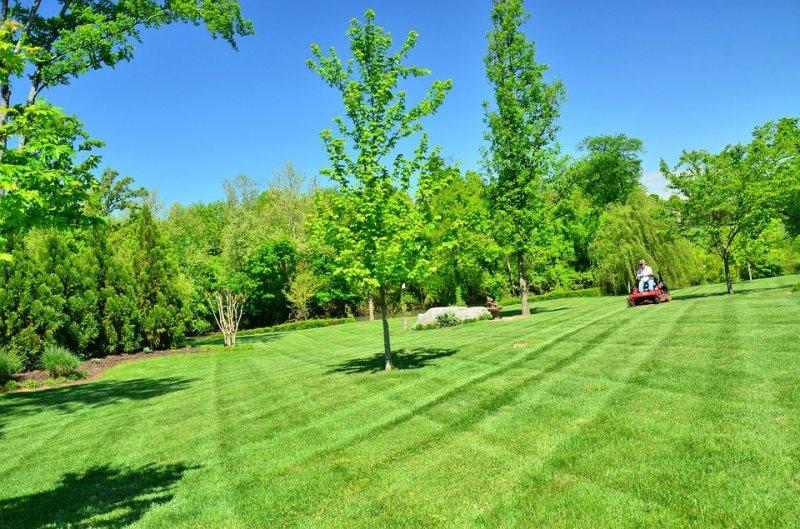 Tonte de pelouse michel grenier saint denis de brompton for Tonte jardin