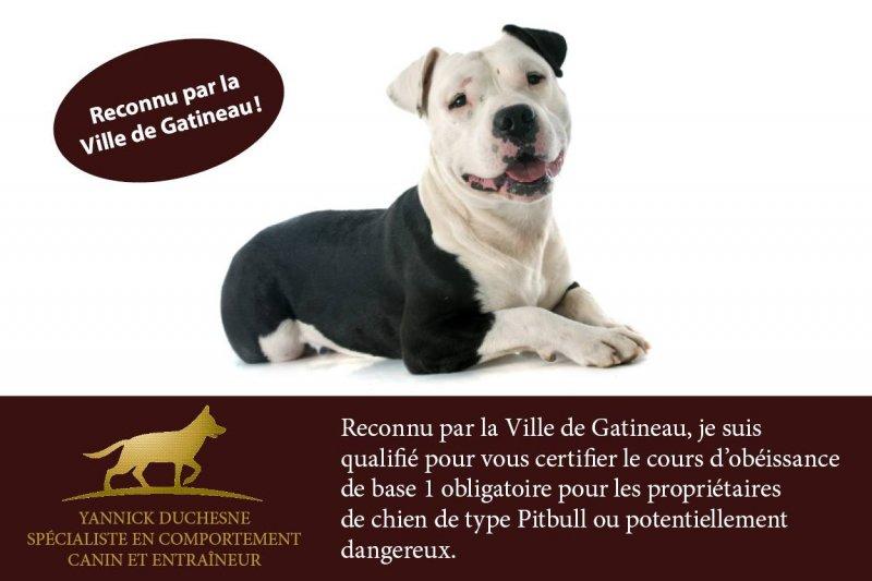 Yannick Duchesne - Spécialiste en comportement canin et